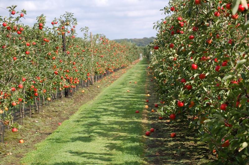fruits et légumes de saison 12