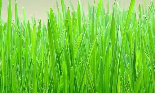 image de l herbe