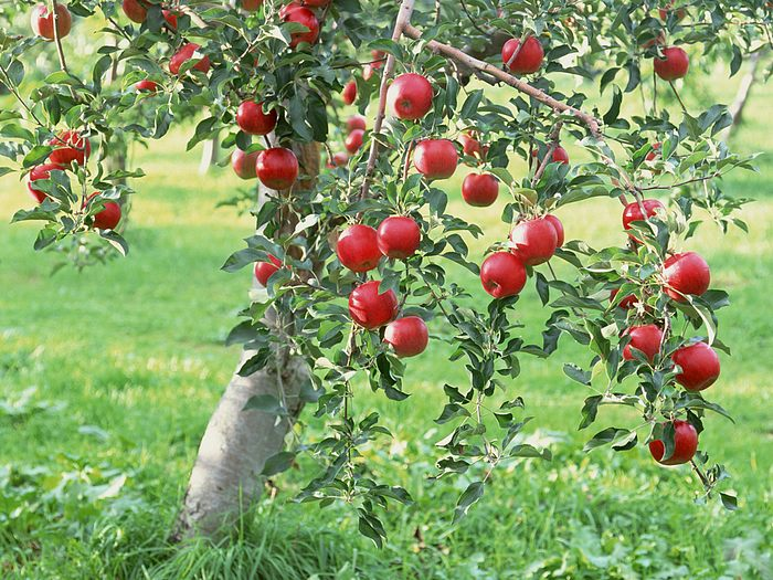 jus-de-pomme