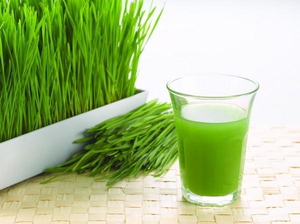 faire pousser herbe de blé